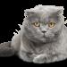 Kattförsäkringen.se